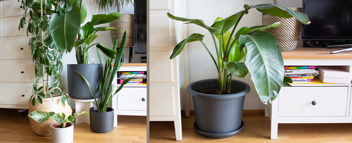 Header_LadyBella_Bea_DIY-Pflanzenhocker_1140x465_1.jpg